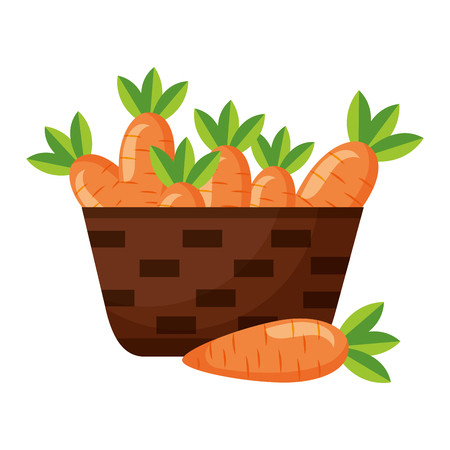 Illustration for wicker basket with fresh carrots vector illustration - Royalty Free Image