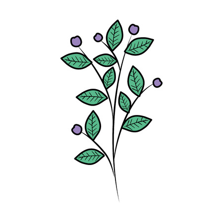 Illustration for branch with leafs plant vector illustration design - Royalty Free Image