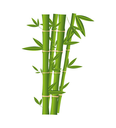 Illustration for bamboo plant isolated icon vector illustration design - Royalty Free Image