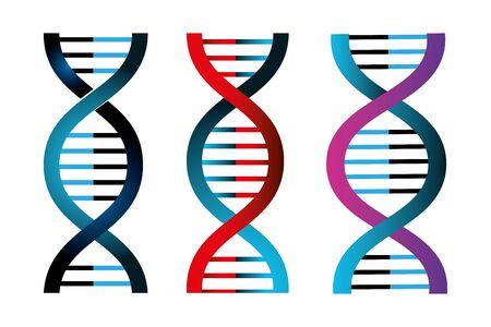 Illustration pour set of structures deoxyribonucleic acid vector illustration design - image libre de droit