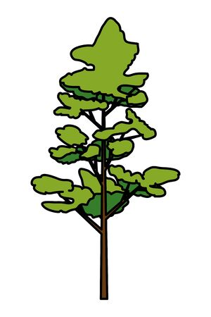 Illustration for pine coniferus tree isolated icon vector illustration design - Royalty Free Image