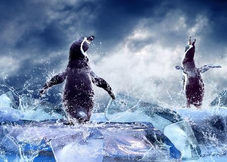 Photo pour Penguin on the Ice in water drops. - image libre de droit