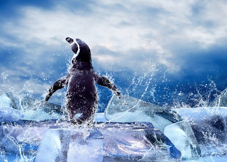 Photo pour Penguin on the Ice in water drops. - image libre de droit