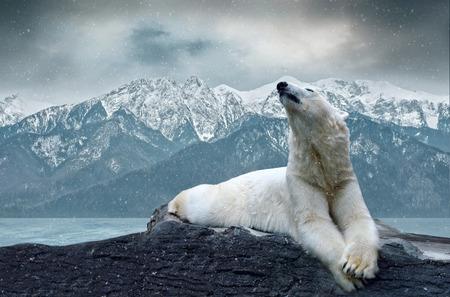 Photo pour White polar bear on the ice - image libre de droit
