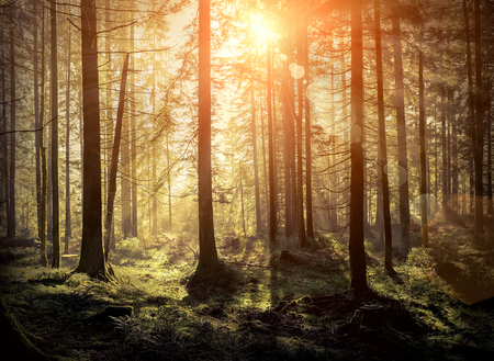 Photo for Beautiful forest view at morning. Sun peeps out through the trees with long shadows on the green grass. - Royalty Free Image