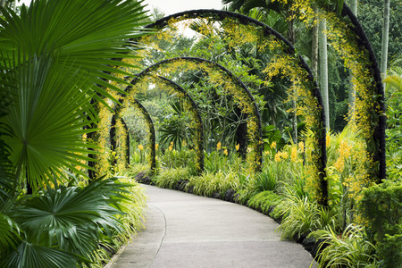 Photo for scenic artificial arcs with many yellow orchid flowers in famous Botanical Garden - Royalty Free Image