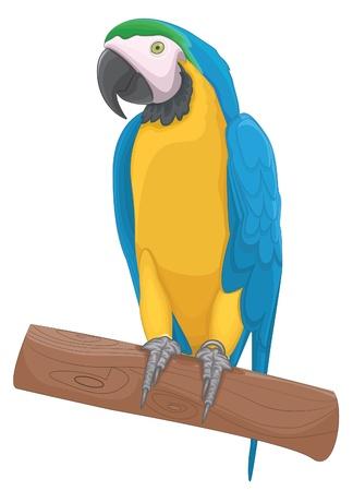 Parrot bird illustration