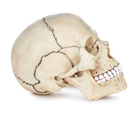 Photo pour Human skull isolated on white - image libre de droit