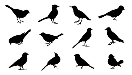 Illustration pour bird silhouettes on the white background - image libre de droit