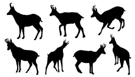 Illustration pour chamois silhouettes on the white background - image libre de droit