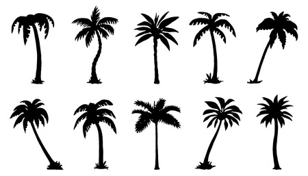 Illustration for palm silhouttes on the white background - Royalty Free Image