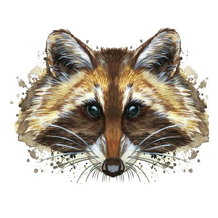 Foto de watercolor picture of an animal of the genus of predatory mammals of the raccoon family, raccoon raccoon, raccoon, raccoon portrait, raccoon head, fluffy wool, winter skin, white background for decora - Imagen libre de derechos