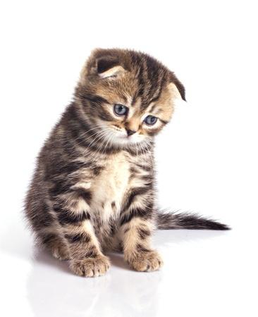 Sad little kitten isolated on white background