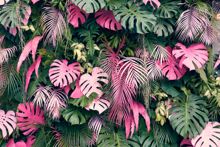 Foto de Tropical trees arranged in full background Or full wall There are leaves in different sizes, different colors, various sizes, many varieties. Another garden layout.as background with copy space. - Imagen libre de derechos