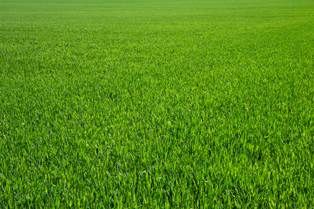 Photo pour Background of a green grass - image libre de droit