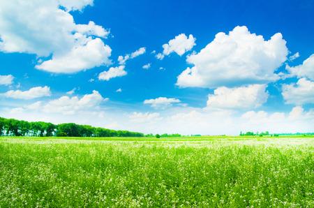 Photo pour green field and blue sky - image libre de droit