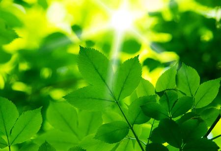 Photo pour fresh and green leaves - image libre de droit