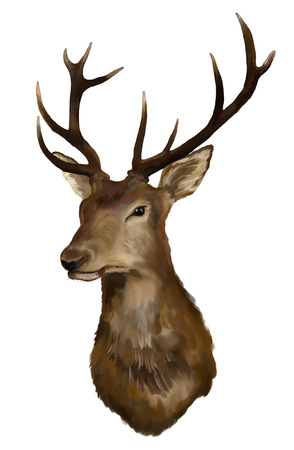Photo for Painting Deer head on a white background - Royalty Free Image