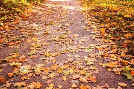 Photo for Avenue of the park in the autumn afternoon - Royalty Free Image