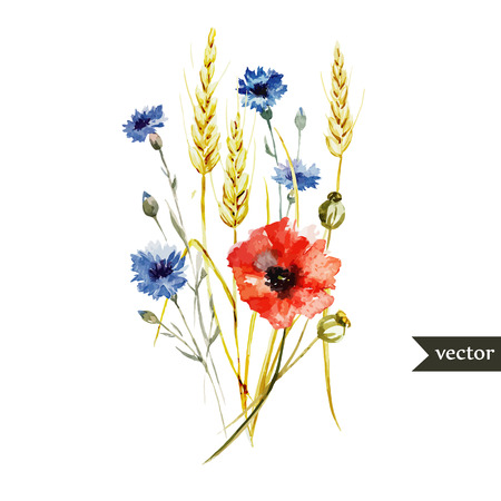 Illustration pour Beautiful watercolor vector bouquet with wildflowers poppy - image libre de droit