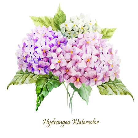Illustration pour Beautiful watercolor vector hydrangea bouquet different colors - image libre de droit
