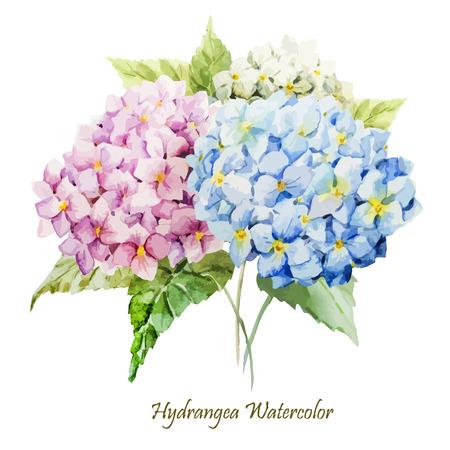 Illustration pour Beautiful watercolor vector hydrangea bouquet different colors - image libre de droit