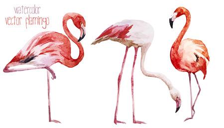 Illustration pour Beautiful vector watercolor set with nice flamingos - image libre de droit