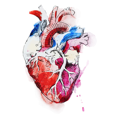 Illustrazione per Beautiful vector image with nice watercolor human heart - Immagini Royalty Free