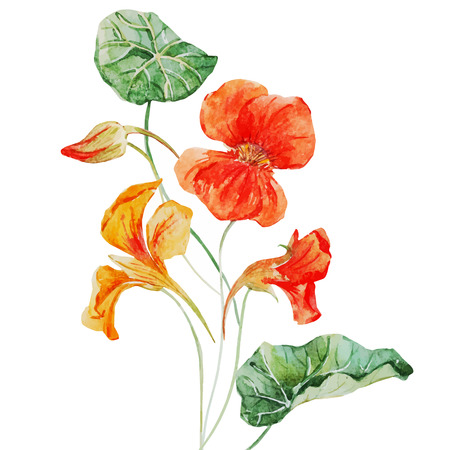Illustration pour Beautiful vector image with nice watercolor nasturtium flower - image libre de droit