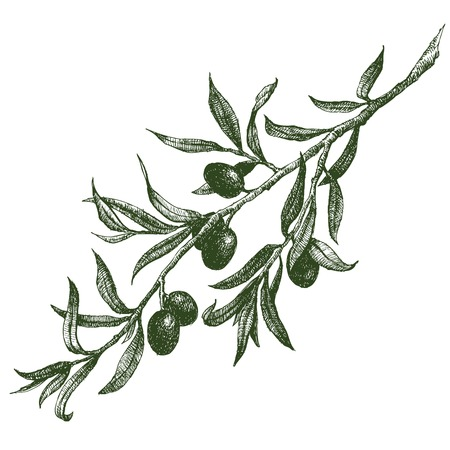 Illustration pour Beautiful vector image with nice hand drawn olive branch - image libre de droit