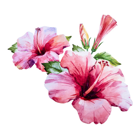 Ilustración de Beautiful image with nice watercolor hand drawn hibiscus flower - Imagen libre de derechos