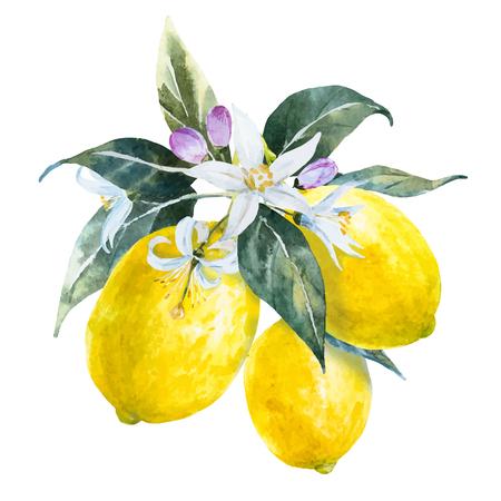 Ilustración de Beautiful image with nice watercolor hand drawn lemons with flowers - Imagen libre de derechos