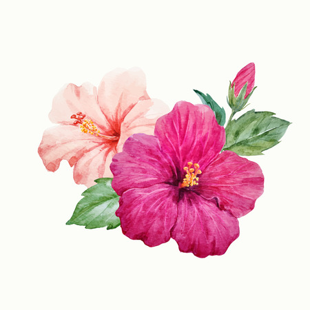 Illustration pour Watercolor vector tropical hibiscus flower - image libre de droit