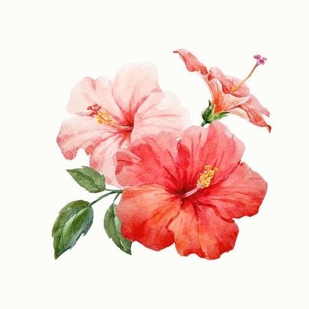 Ilustración de Watercolor vector tropical hibiscus flower - Imagen libre de derechos