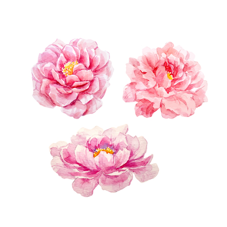 Illustration for Watercolor peony vector set - Royalty Free Image