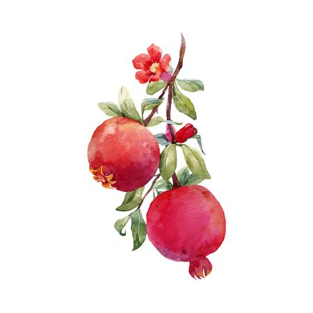 Illustration pour Pomegranate fruit vector branch - image libre de droit
