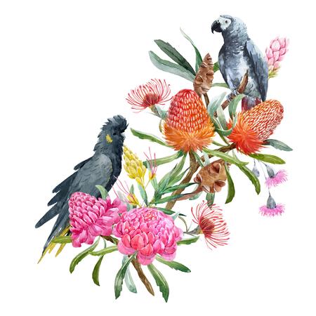 Ilustración de Watercolor banksia flower vector composition - Imagen libre de derechos