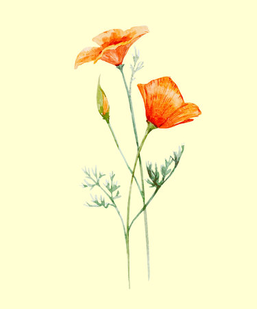 Illustration pour Beautiful illustration with hand drawn watercolor poppy flower - image libre de droit