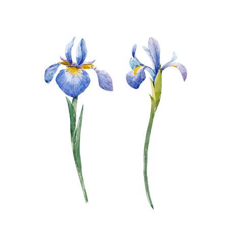 Ilustración de Watercolor iris vector set - Imagen libre de derechos