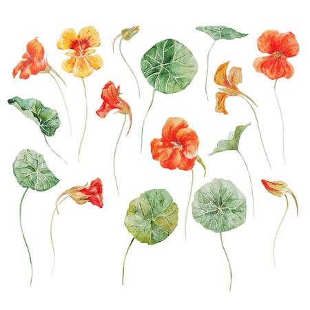 Illustrazione per Watercolor floral vector set - Immagini Royalty Free