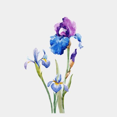 Ilustración de Watercolor iris vector composition - Imagen libre de derechos