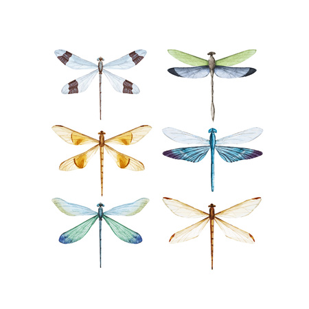 Ilustración de Watercolor dragonfly vector set. - Imagen libre de derechos