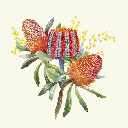 Illustration for Watercolor Australian banksia composition on colored illustration. - Royalty Free Image