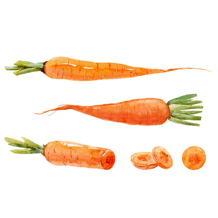 Ilustración de Watercolor carrot vector set - Imagen libre de derechos