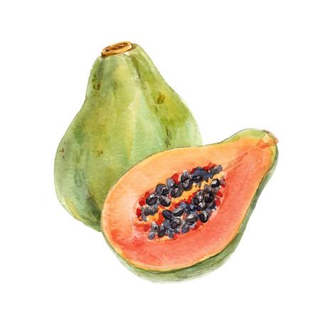 Illustration pour Watercolor papaya vector set - image libre de droit