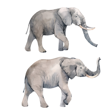 Illustration pour Watercolor elephant vector illustration - image libre de droit