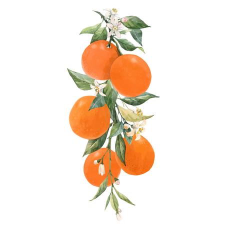 Ilustración de Beautiful vector illustration with watercolor citrus fruits orange lemon - Imagen libre de derechos