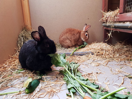 Photo pour Rabbits eat green food - image libre de droit