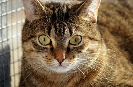 Photo pour Portrait of a beautiful cat - image libre de droit