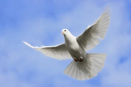 Photo for White dove flying on on the Sky. - Royalty Free Image